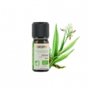 Ginger Essential Oil (5 ml)