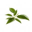 Αιθέριο Έλαιο Καμφορά (10ml)